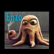 octopus enzo