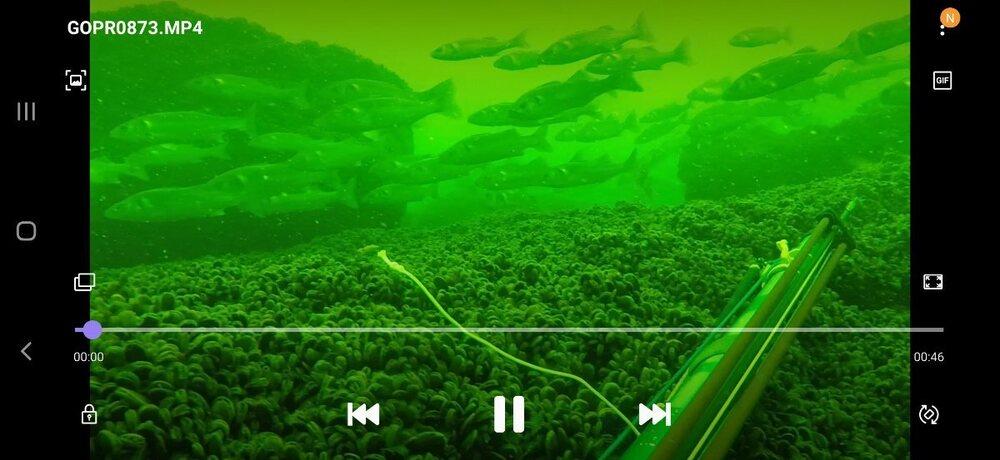 Screenshot_20210804-133623_Video Player.jpg