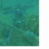 Chasse Sous Marine En Martinique Du 12/01/2017 - dernier message par guillaumemesdu44